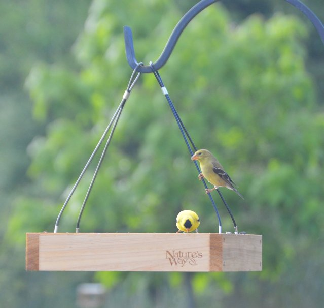 tray-feeder